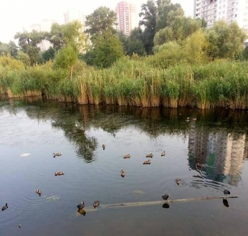 Утиное озеро