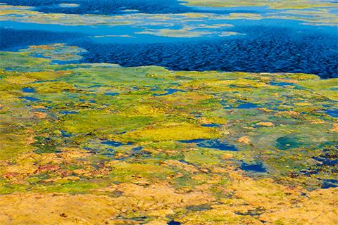 Так сейчас выглядит уникальное озеро Байкал